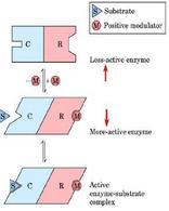 C: subunità catalitica; R: subunità regolatoria. Il Substrato si lega al sito catalitico, il Modulatore alla subunità regolatoria