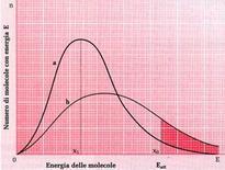 Fig. 1: l'enegia di attivazione si abbassa in una reazione catalizzata (curva b) rispetto ad una reazione non catalizzata (curva a)