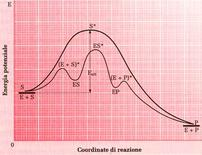 Fig. 2: Formazione del complesso ES con liberazione dell'Enzima e del prodotto reazione P