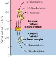 Composti fosforici a bassa ed alta energia