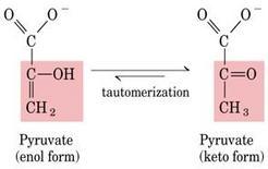 Fig. 5.18.2: la tautomerizzazione dell'enolpiruvato nella sua forma chetonica di piruvato