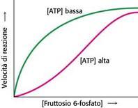 Figur Fig. 5.21.1: regolazione allosterica della fosfofruttochinasi da parte dell'ATP