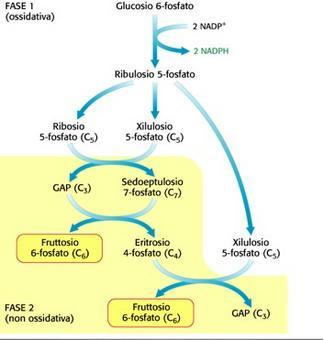 Via del pentosio fosfato