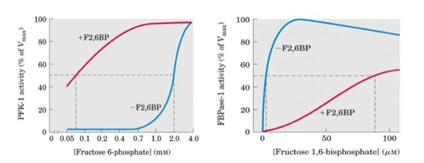 Ruolo del fruttosio 2,6bisfosfato nella regolazione della glicolisi e della gluconeogenesi