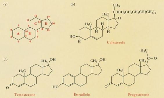 a: struttura degli steroidi; b: colesterolo; c: alcuni ormoni sessuali steroidei