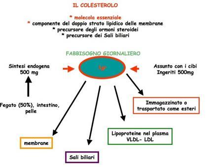 Il colesterolo e i suoi derivati