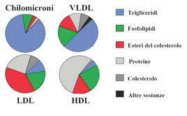 Differente composizione delle diverse classi di lipoproteine