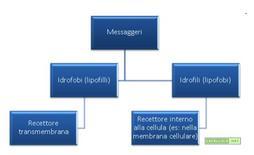 Classificazione dei messaggeri e dei recettori