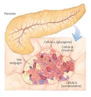 Ormoni secreti dal pancreas
