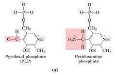 Struttura del piridossalfosfato (PLP) e sua interconversione in piridossaminafosfato (PMP)