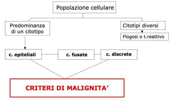Algoritmo e classificazione citotipi.