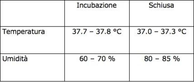 Dal 14° g umidificazione con acqua a 35°C. Al 32° g si passa in camera di schiusa.