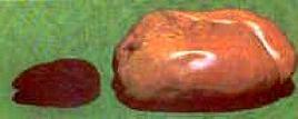 Due fegati a confronto. A sinistra un fegato d'oca normale, a destra quello ottenuto dopo il gavage