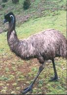 Un Emù