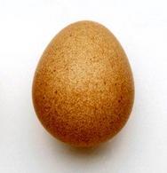 Un uovo di faraona
