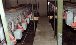 Capannone con gabbie disposte su un solo piano