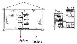 Un tipico esempio di sistema aviario