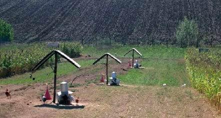 Un allevamento di polli d'erba