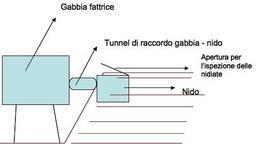 Schema di una gabbia fattrice a cella interrata