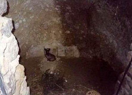 Un coniglio in un tipico fosso