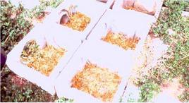 Interno dei nidi