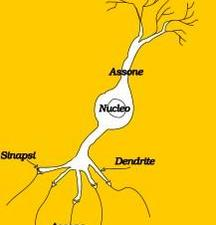 Neurone biologico