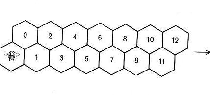 L'ape può raggiungere la cella n seguendo FIB(n+1) percorsi diversi