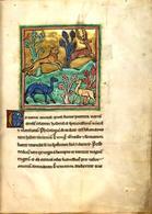 Leopardo raffigurato nel Bestiarium Rochester, XIII secolo (British Library, Royal MS 12 F XIII). Imamgine da: Wikipedia