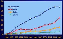 Specie vegetali GM maggiormente coltivate