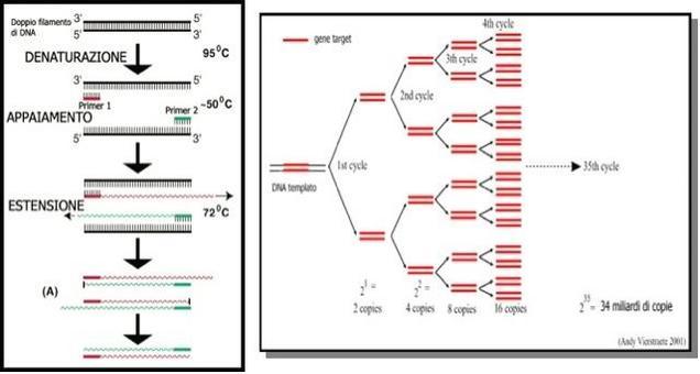 Schema di PCR