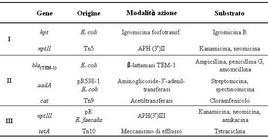 Geni resistenti all'antibiotico usati come geni marker. Tn: trasposonone