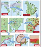 Una gerarchia di scale per analizzare la distribuzione geografica del muschio Tetraphis (Mappa tratta da Krebs, 2001 su dati di Forman 1964)