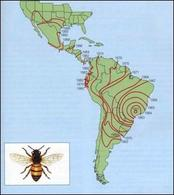 L'espansione dell'ape africana nelle Americhe dal 1957 (modificata da Krebs, 2001 su dati di O.R. Taylor).