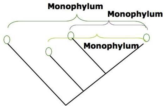 Un monophylum comprende solo i discendenti di un antenato comune.