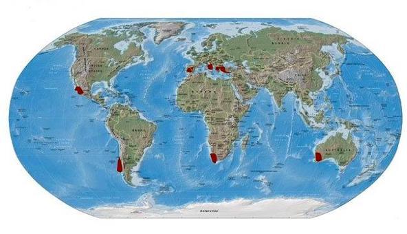 Distribuzione delle aree con clima mediterraneo. Modificato da  Wikipedia.