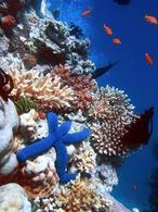 Barriera corallina. Fonte  Wikipedia.