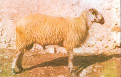 Fonte: Associazione Nazionale della Pastorizia.