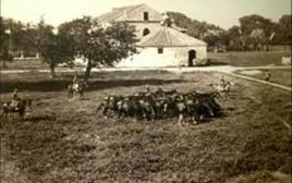 Bufalara. Fonte: Assessorato all' Agricoltura – Regione Campania