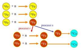 Reazione di formazione del cobalto, attraverso la cattura di neutroni, tramite processi r ed s. Fonte: M. Capaccioli.