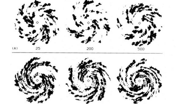 Numerical simulations of stochastic self-propagating star formation in spirals (from Gerola & Seiden, Ap.J., 223, 129, 1978). Originally roundish star-forming regions get stretched out by differential rotation.