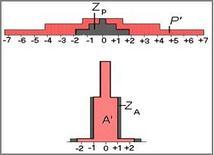 Rappresentazione grafica delle distribuzioni A e P II normalizzazione.