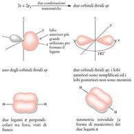 Orbitali ibridi sp dell'atomo di carbonio. Fonte: Seyhan Eğe, La Chimica Organica Essenziale, Idelson-Gnocchi, 2008
