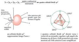 Orbitali ibridi sp3 dell'atomo di carbonio. Fonte: Seyhan Eğe, La Chimica Organica Essenziale, Idelson-Gnocchi, 2008