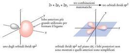 Orbitali ibridi sp2 dell'atomo di carbonio. Fonte: Seyhan Eğe, La Chimica Organica Essenziale, Idelson-Gnocchi, 2008