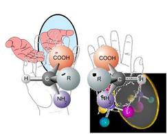 Es. di molecola chirale. Fonte: Seyhan Eğe, La Chimica Organica Essenziale, Idelson-Gnocchi, 2008