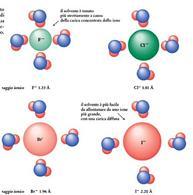 Effetto della dimensione di un anione sulla sua interazione con l'acqua, solvente protico. Fonte: Seyhan Eğe, La Chimica Organica Essenziale, Idelson-Gnocchi, 2008
