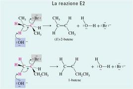 La reazione E2. Fonte: Seyhan Eğe, La Chimica Organica Essenziale, Idelson-Gnocchi, 2008