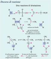 Reazione di idratazione. Fonte: Seyhan Eğe, La Chimica Organica Essenziale, Idelson-Gnocchi, 2008