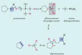 Disidratazione acido-catalizzata di un alcol. Fonte: Seyhan Eğe, La Chimica Organica Essenziale, Idelson-Gnocchi, 2008