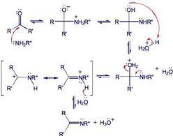 Reazione del gruppo carbonilico con le ammine. Fonte: Seyhan Eğe, La Chimica Organica Essenziale, Idelson-Gnocchi, 2008